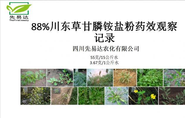 88%草甘膦铵盐可溶粒剂 药效实验对比图